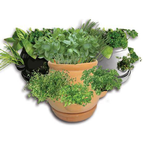 kitchen herb pots kitchen herb pots set of 3 163 19 99