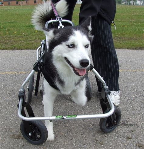 wheelchair for dogs wheelchairs for handicapped dogs built quality by ruff rollin front support