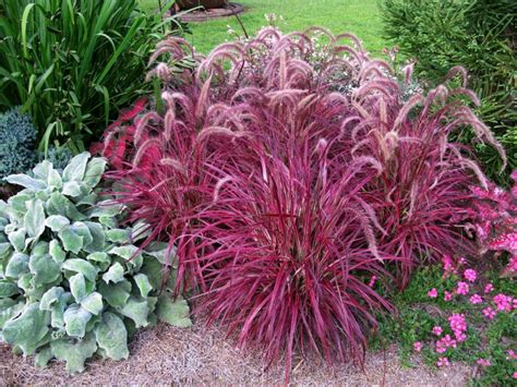 amazing color for the fall landscape landscaping ideas amazing color for the fall landscape hgtv