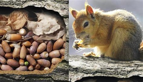 do squirrels ever forget where they put their nuts the dodo
