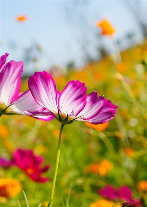 Flower Photography by Summer Flowers Photography Www Imgkid The Image