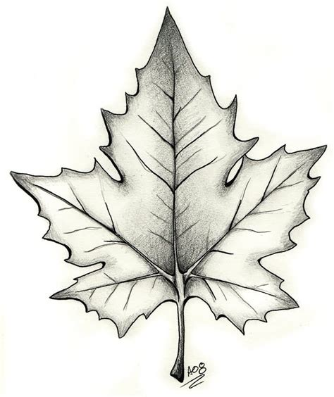 holly leaf tattoo designs black and grey maple leaf design tattoos