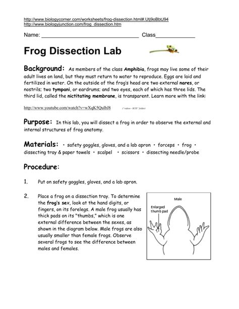 Net Frog Dissection Worksheet Answers by Uncategorized Frog Dissection Lab Worksheet