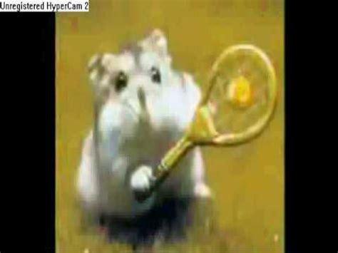 youtube music hamster dance hamster dance youtube