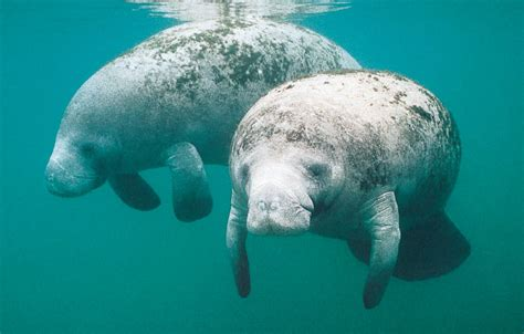 marine mammal research different features and studies