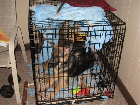 puppy crate in bedroom or not crate bed or not german shepherd dog forums dog beds and