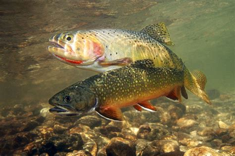 best bait best trout bait our guide best trout lures
