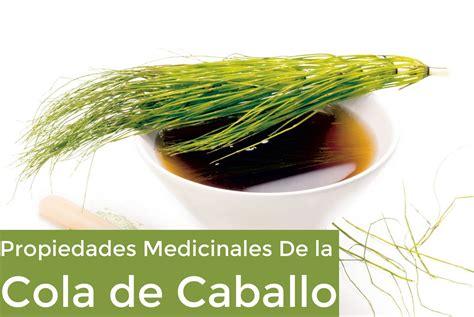 la cola de la 5 usos medicinales de la cola de caballo la gu 237 a de las vitaminas