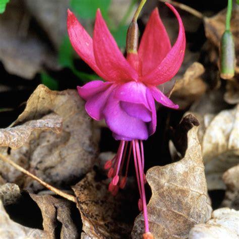 Die Schönsten Zimmerpflanzen 4396 by Die Sch 246 Nsten Rosa Blumen Im Garten Anbauen Gartengestaltung