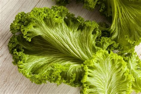 6 vegetables with the most protein plant power the 10 veggies with the most protein