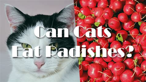can dogs radishes can cats eat radishes pet consider