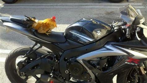imagenes muy graciosas de motos 25 fotos chistosas de personas y animales muy locos fress