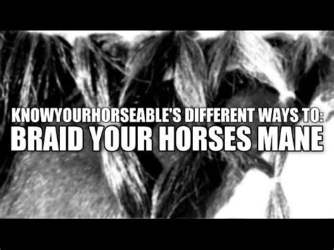 grooming: different ways to braid your horses mane youtube