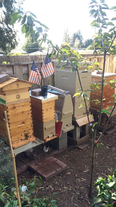 can i raise bees in my backyard raising bees in backyard 28 images raising bees in