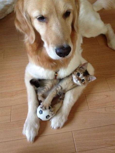 hilarious  cats  dogs barnorama