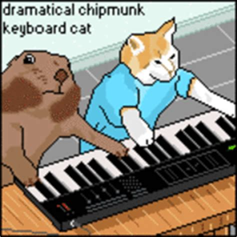 Keyboard Cat Meme - keyboard cat image gallery know your meme