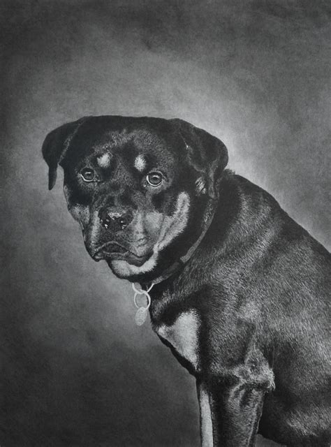 rottweiler drawings rottweiler pencil drawings www imgkid the image kid has it