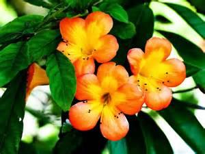 Beautiful Orange Beautiful Orange Flower Beautiful Desktop Wallpapers 2014