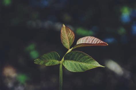 wallpaper daun resolusi tinggi gambar pohon alam hutan cabang cahaya menanam