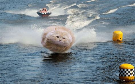 epic boats 26 cat epic wiggle gifs
