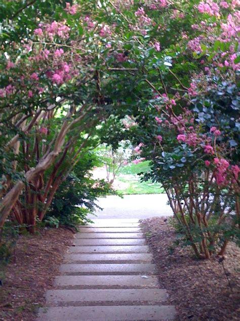 botanical gardens myrtle 17 best images about crapemyrtles on gardens crepe myrtle trees and front yards