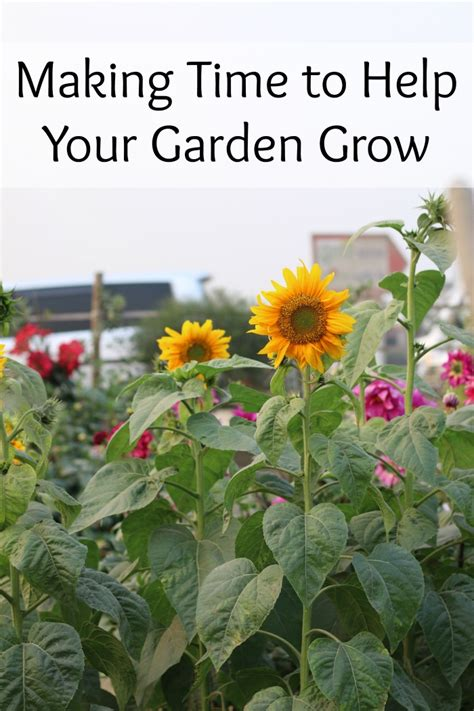 Time To Help by Time To Help Your Garden Grow The Mount 6 Pack