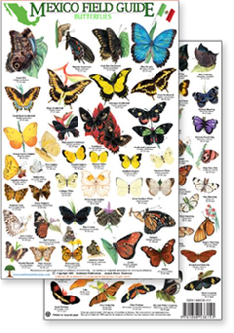 a guide to butterflies of mexico and central america books mexico pacific coast field identification guides by