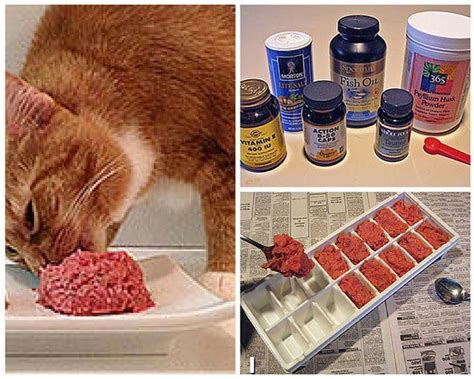 food recipe vet recommended easy cat food cat food recipes the best healthy and inexpensive diy