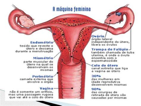 vestibulo genital feminino sistema reprodutor feminino anatomia e fisiologia