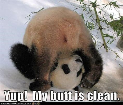 Funny pandas with captions voltagebd Choice Image
