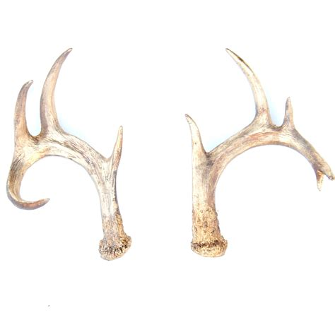 faux deer antlers antique gold