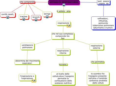 respirazione interna ed esterna sistema respiratorio di di corrado lucchesi e mossa