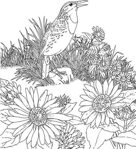 kansas western meadowlark coloring page purple kitty