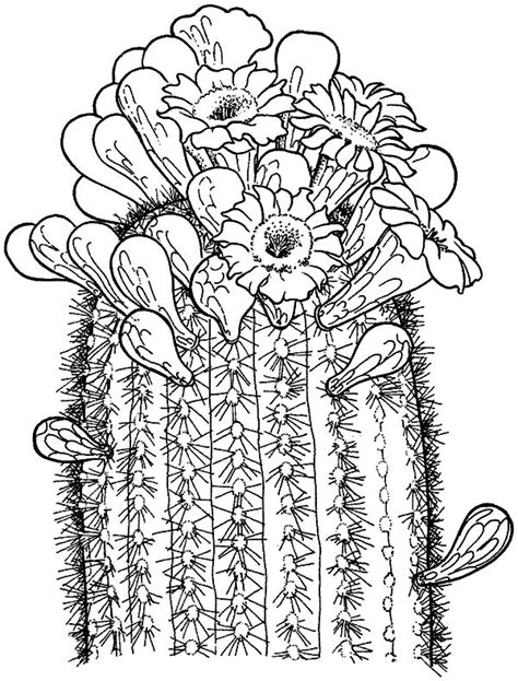 cactus saguaro coloring pages freecoloring4u com
