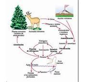 Educarchile  Organismo Y Ambiente