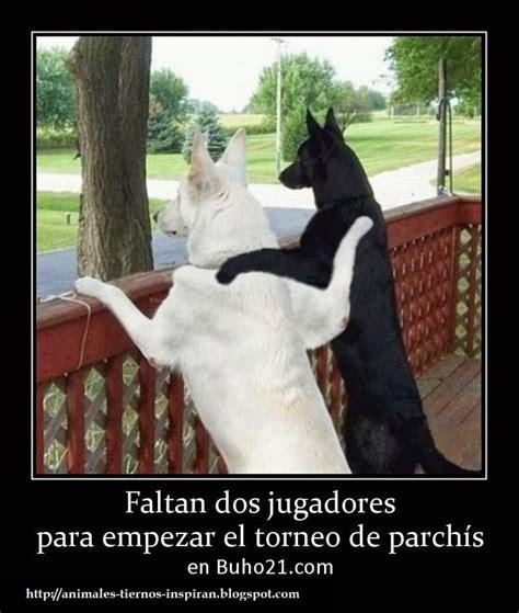 imagenes de animales graciosos para compartir en facebook animales tiernos inspiran ver imagenes divertidas