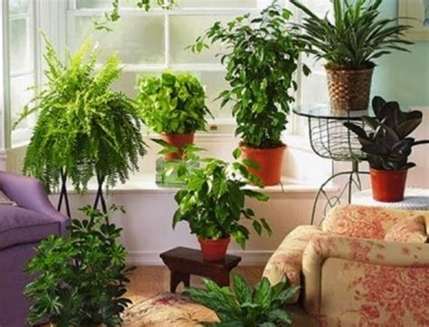 Daun Rambat Hias Besar Bunga Plastik Hiasan Dekorasi Gedung tips memilih dan merawat tanaman hias indoor bibitbunga