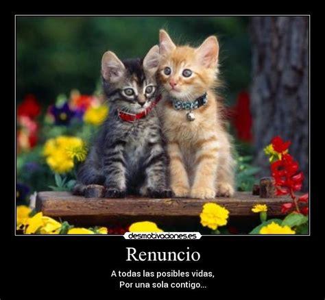 imagenes de te extraño gatitos te amo gato imagui