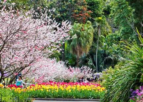 the botanical gardens sydney guided walks at the royal botanic garden sydney living