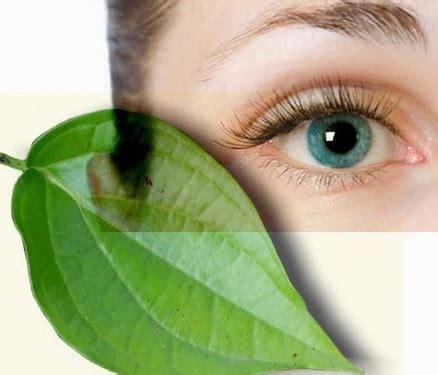 khasiat daun sirih  mata bibitbungacom
