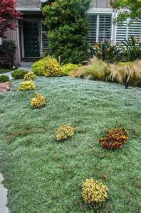 drought tolerant evergreen ground cover pictures to pin on