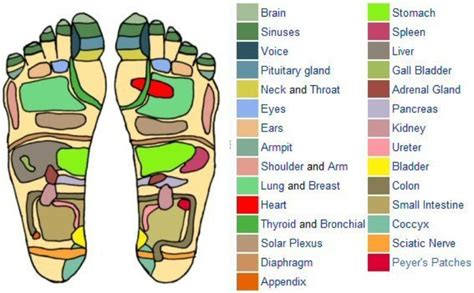 pressure point diagram 31 printable foot reflexology charts maps template lab