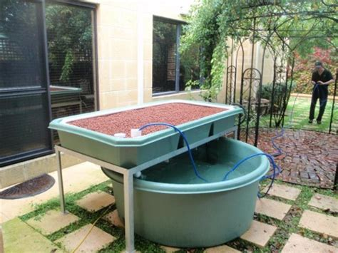 backyard aquaponics forum james s system backyard aquaponics