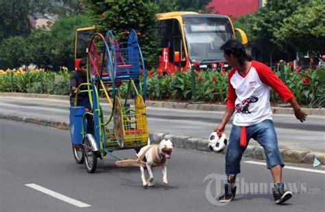 Pelatih Anjing melatih ketangkasan anjing foto 1 584012 tribunnews