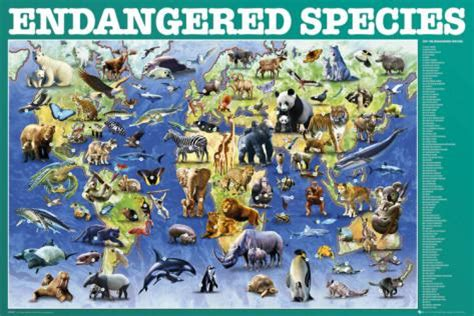 endangered animals and species – the new dealer
