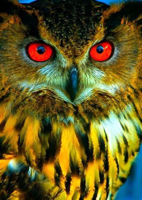 what color are owls beautiful owl