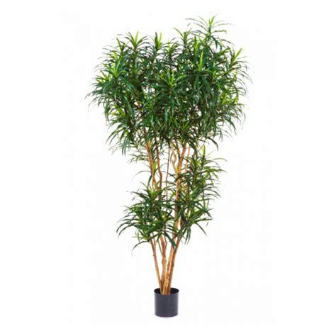 dracaena reflexa dracaena reflexa 180cm 10 24206n neutraal retail
