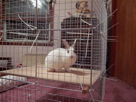 hd animals: homemade rabbit cages