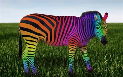 apple wallpaper zebra 1920x1200 rainbow zebra desktop pc and mac wallpaper