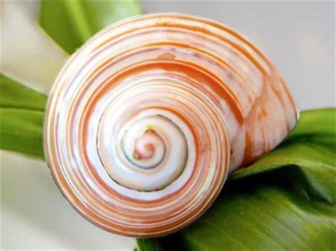 shell spiral jigsaw puzzle jigzone.com